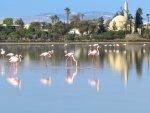 фламинго и мечеть.jpg