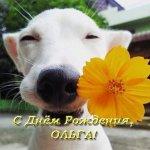 otkrytka-s-dnem-rozhdeniya-dlya-olgi-prikolnaya.jpg