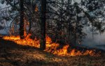 Пожар в лесу Абхазии.jpg