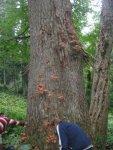 Абхазия грибы.jpg